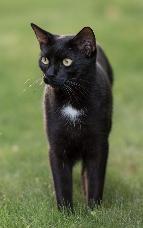 cat-3672086_1920